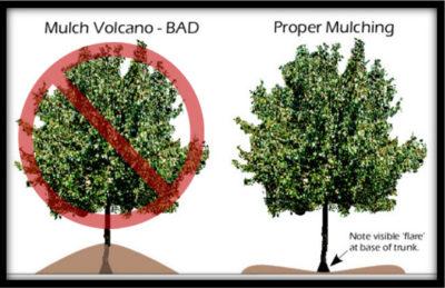 mulch volcano