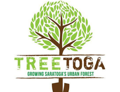 Volunteer for Tree Toga 6 – April 29, 2017 from 9:30 to noon